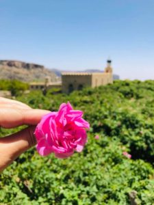 Sběr růží Omán